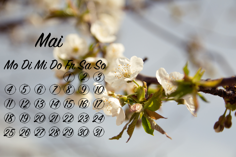 blumen wallpaper, desktop hintergrund, flower wallpaper, mai kalender