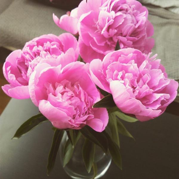 flower, peonies, Pfingstrosen